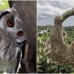 พาไปชม 24 ภาพสัตว์ป่าและธรรมชาติน่าทึ่ง ที่ได้รับการเสนอชื่อเข้าชิงรางวัล People's Choice
