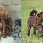 ชีวิตใหม่ของเจ้า Millie น้องหมาที่ถูกทอดทิ้งมานาน จนในที่สุดก็ได้เจอบ้านที่แท้จริง !!