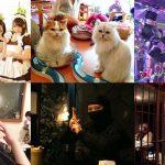 มาดู 10 คาเฟ่สุดฮอตและน่าทึ่งในญี่ปุ่น บอกเลยว่าไม่ซ้ำใครที่ไหนแน่นอน!!