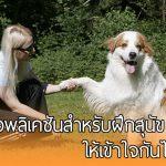 """แนะนำแอพลิเคชันสำหรับคนรักสุนัข เพื่อให้คุณ """"สื่อสาร"""" กับเจ้าหมาที่รักได้ง่ายยิ่งขึ้น!!"""