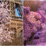 10 สถานที่สุดดีงามเพื่อการชมดอกซากุระ ไม่ได้มีแค่ที่ญี่ปุ่นด้วยนะ แต่มีอยู่รอบโลกเลยล่ะ!!