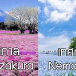 6 เทศกาลชมดอกไม้รอบโตเกียว ที่คุณต้องไม่พลาดในญี่ปุ่น ช่วงฤดูใบไม้ผลิ 2018!!