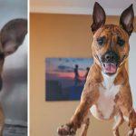 15 ภาพความเปลี่ยนแปลง ก่อน-หลังของเหล่าสุนัขที่ถูกรับเลี้ยง ช่างอัศจรรย์เหลือเกิน!!
