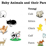 ไขข้อข้องใจการเรียกชื่อสัตว์และลูกๆ ทั้ง 40 ชนิด ในภาษาอังกฤษ จะเรียกว่าอะไรบ้างนะ…