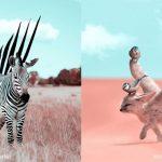 ศิลปินชาวฝรั่งเศสเกิดไอเดียเจ๋ง สร้างภาพสัตว์จินตนาการ ให้โลดแล่นในความเป็นจริง…