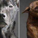 ผลงานภาพถ่ายสุดสะเทือนใจ…วินาทีสุดท้ายของสุนัขจรจัดในศูนย์สงเคราะห์ไต้หวัน
